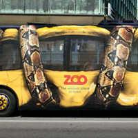 Illusion d'optique artistique - Le bus écrasé par un serpent constricteur