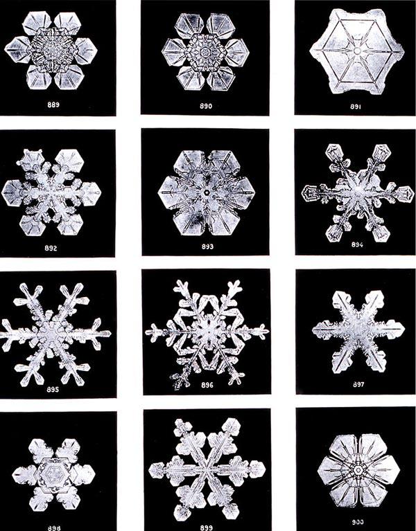 Différentes formes de flocons de neige