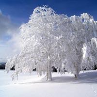 Comment se forme la neige?