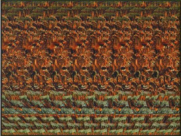 Stéréogramme, Image 3D de Lions